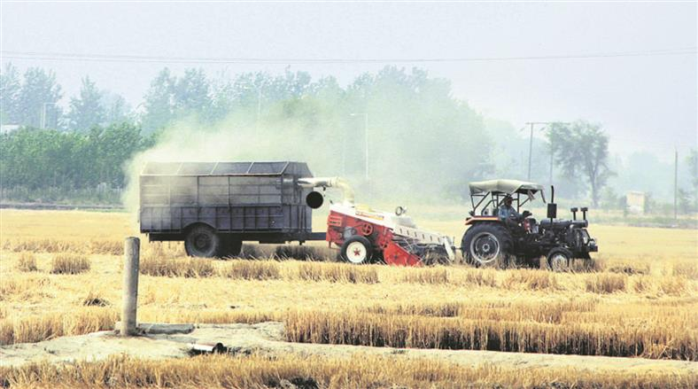 Wheat from other states smuggled into Punjab for MSP, 3 trucks seized