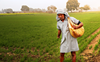 Centre directs fertiliser firms not to hike MRP of non-urea fertilisers; sell at old rates