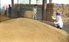 Wheat purchase tardy