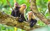 Five new animal species discovered in Tibet