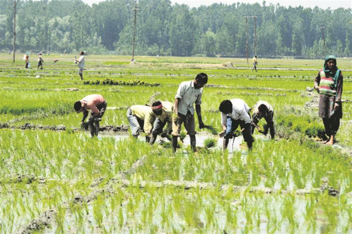 MHA alerts Punjab on bonded labourers in border districts