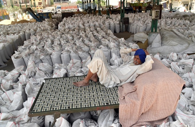 Wheat production drops by 67 kg/ha across Punjab