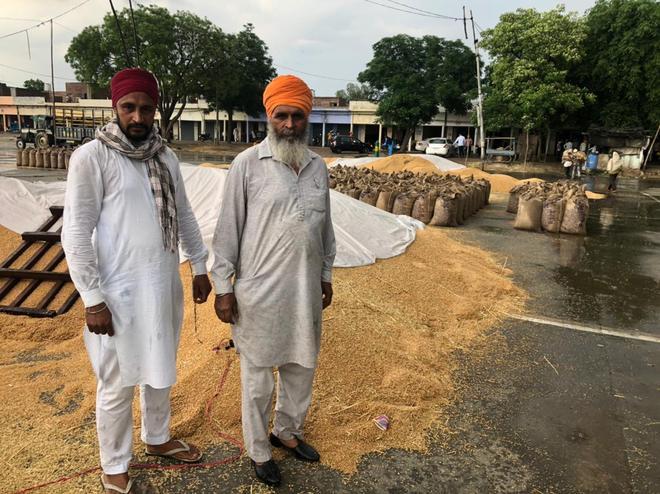 Rain spells misery for farmers in Tarn Taran