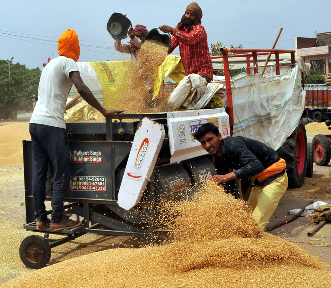 Wheat grain analysis: Strict norms by FCI fail to match ground reality