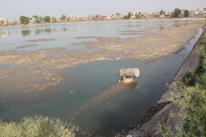 Water war: Haryana blames Delhi for ammonia spike