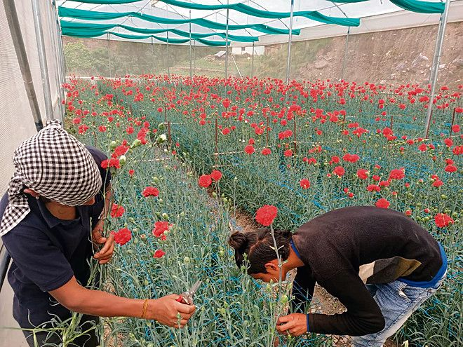 Flower growers fear tough times amid Covid restrictions