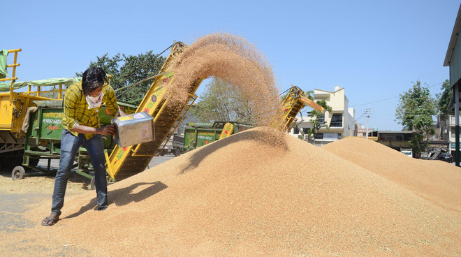 800 MT of wheat procured at 78 grain markets on Day 2