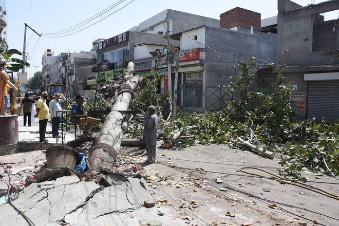 Storm hits Ludhiana, uproots 24 trees