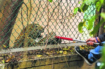 Leopard strays into Jammu, injures 3