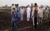 Wheat crop gutted in 56 acres in Ludhiana village