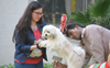 Pet registration fee: Ludhiana Civic body mulls exemption to some categories