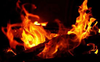 Chandigarh: Fire in jungle area of Sector 49