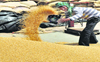 90 quintal of wheat smuggled from Rajasthan seized