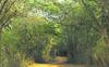 11 yrs on, Chandigarh to conduct wildlife census