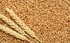 Wheat procurement starts at Chandigarh's Sector 39 grain market