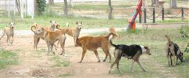 5K stray dogs to be sterilised