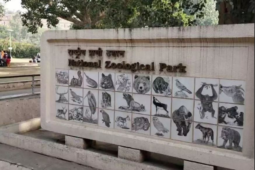 Samples of lion, owls from Delhi zoo test negative for COVID-19