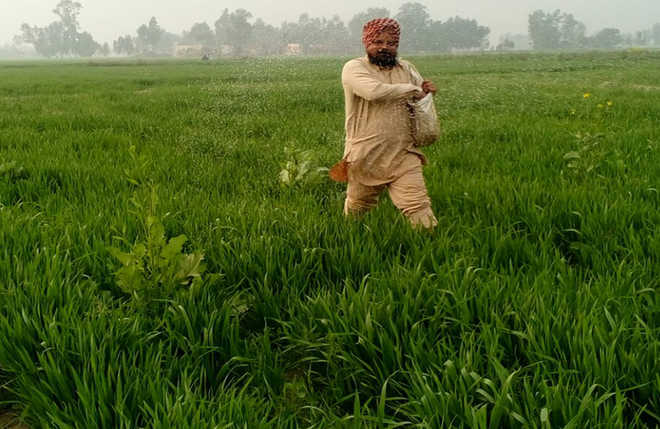 Subsidy on DAP hiked by 140 pc; farmers to get fertiliser at old rates of Rs 1,200