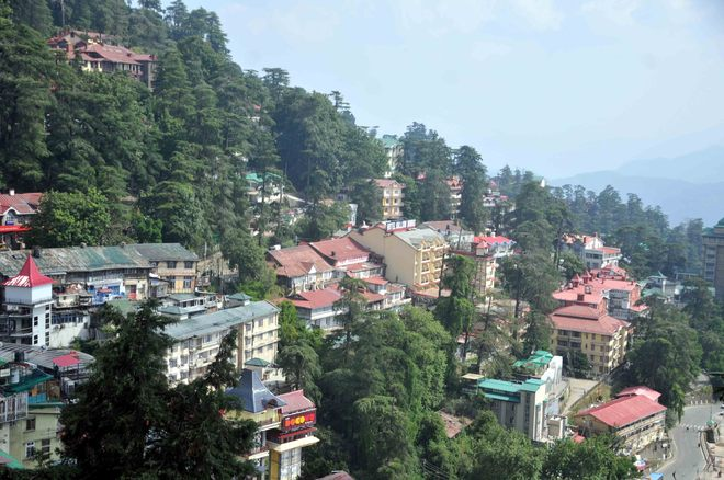 Himachal high court stays tree felling permissions