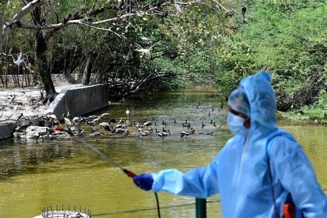 Delhi zoo sends samples of some animals for COVID-19 testing at IVRI Bareilly