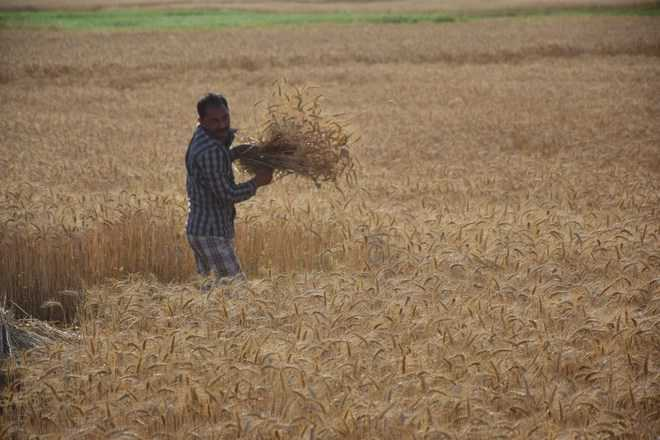 Telangana allows NRIs to sell or gift agricultural land remotely