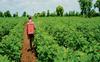 Sensitise farmers to minimise pesticide residue