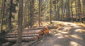 Wood security is a step towards self-reliance