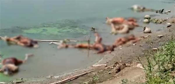 Now, bodies found floating on Ganga in UP's Ghazipur