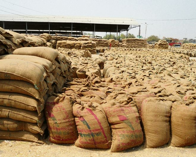Govt halts wheat procurement