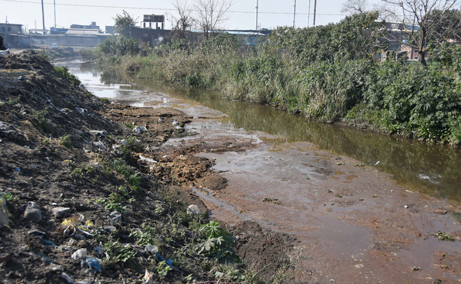 Plan to shift dairies hangs fire; untreated waste pollute Buddha Nullah