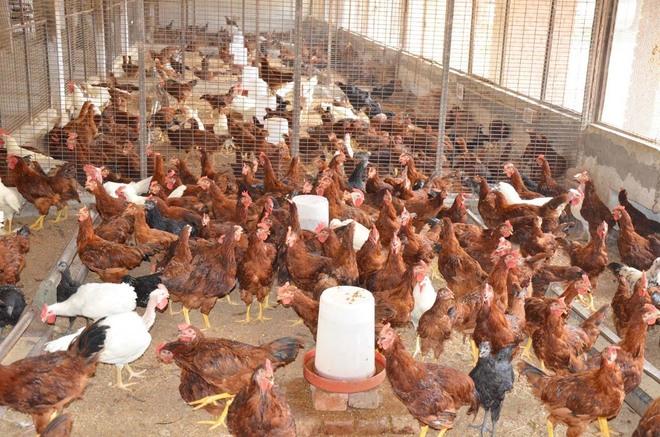 Avian influenza: Don't panic,  take precautions, say experts