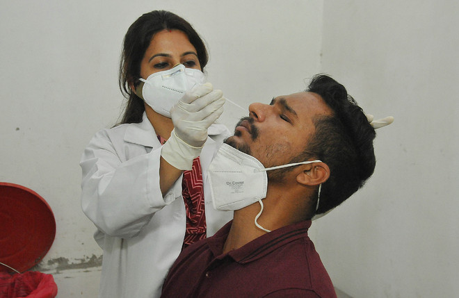 Daily Covid sampling touches all-time high in Ludhiana