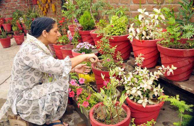 Using waste bottles as planters is her hobby