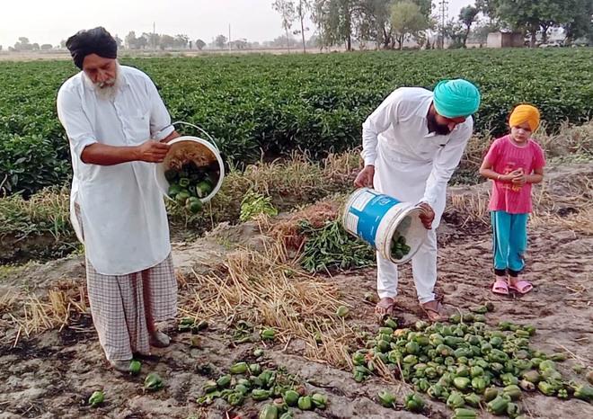 Covid-induced lockdown: No buyers, Punjab farmers dump veggies