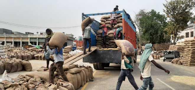 86.5% procured wheat lifted in Yamunanagar