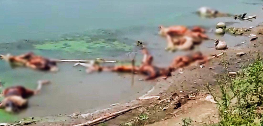 48 bodies found near Ganga ghats in Buxar