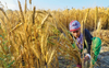 Farm credit stagnant in Punjab for 3 yrs
