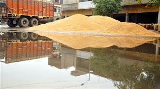 Foodgrains get drenched at Bhagtanwala mandi