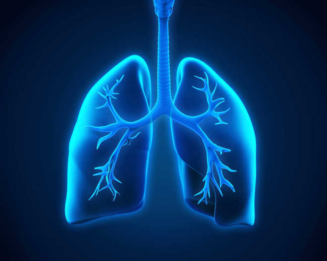 Decoded: How Covid-19 aerosols travel through our lungs