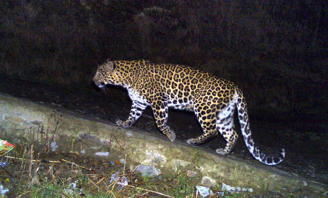 4-year-old mauled by leopard in Budgam
