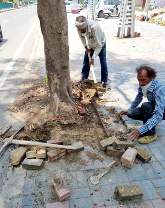 Tiles around trees removed in Patiala's Bhupindra Road