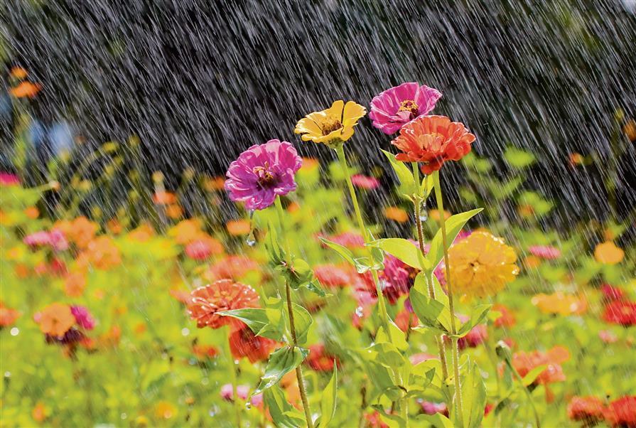 Tips to monsoon gardening