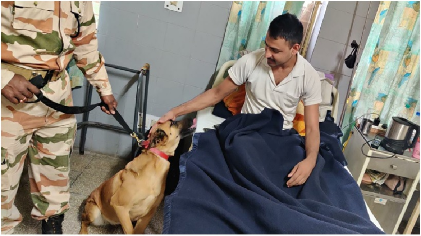 Retired ITBP canines find new role as therapy dogs near Chandigarh
