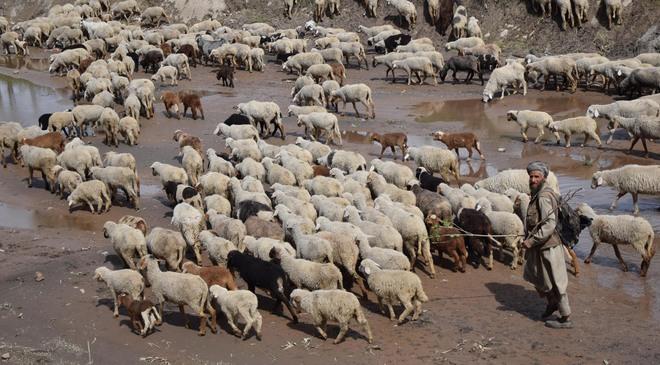 Bhaderwah: Nomads seek vax camps