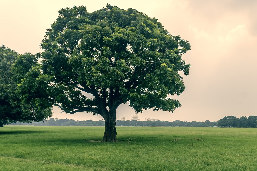 Now, Maharashtra to give 50-year-old urban trees 'heritage' tag