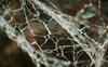 Vegan spider silk a sustainable alternative to single-use plastics?