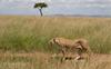 The enchanting Masai Mara