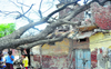 Storm uproots trees, electricity poles in Patiala