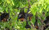 Chinese researchers find batch of new coronaviruses in bats: Report