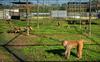 Primates are aiding the fight against COVID-19 in Louisiana